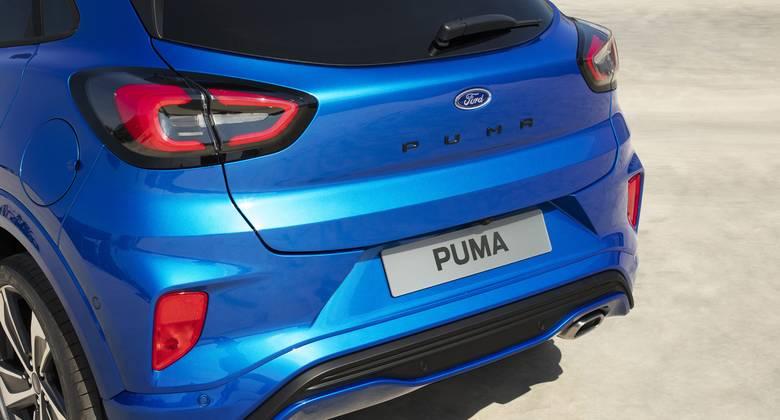 Koreanischer Puma Wird Flachgelegt
